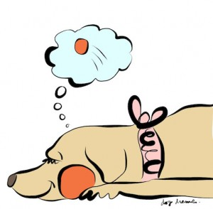 dog_dreams